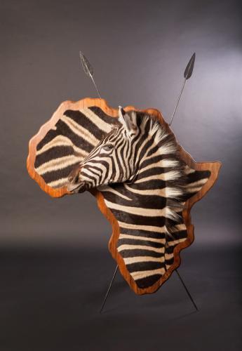 3D-Zebra-shield