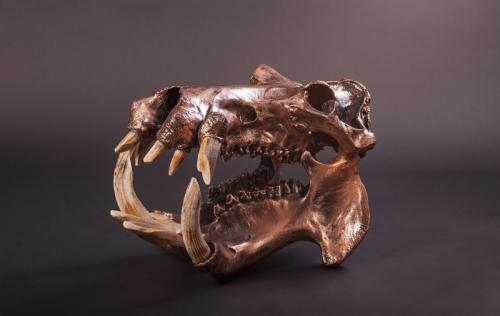 Bronze-hippo-skull