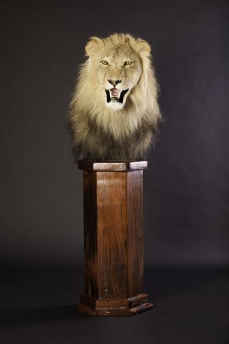Lion Pedestal Front