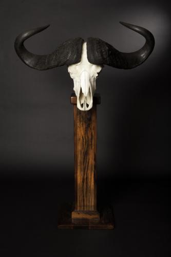 Buffalo Skull Pedestal straight