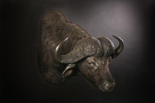 Buffalo sneek mount
