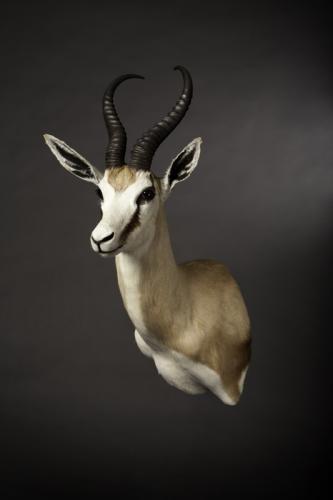 Springbok Drop-Shoulder mount
