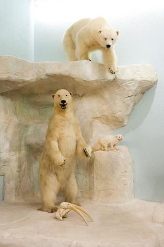 Polar Bear Scene close